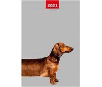 KALENDARZ 2020 A6 TYG.OVERGROWN, Podkategoria, Kategoria
