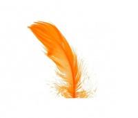 Piórka w torebce foliowej 15 gram, pomarańczowe, Produkty kreatywne, Artykuły dekoracyjne