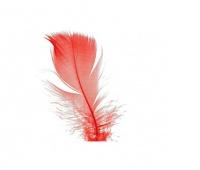 Piórka w torebce foliowej 15 gram, czerwone, Produkty kreatywne, Artykuły dekoracyjne