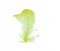 Piórka w torebce foliowej 15 gram, seledynowe, Produkty kreatywne, Artykuły dekoracyjne