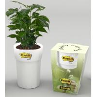 Sadzonka Drzewka Kawowego 3M, Promocje, ~ Nagrody