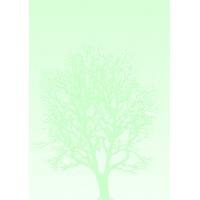 Arkusze barwne Drzewo 100g 50 arkuszy A4, Arkusze barwne, Galeria Papieru